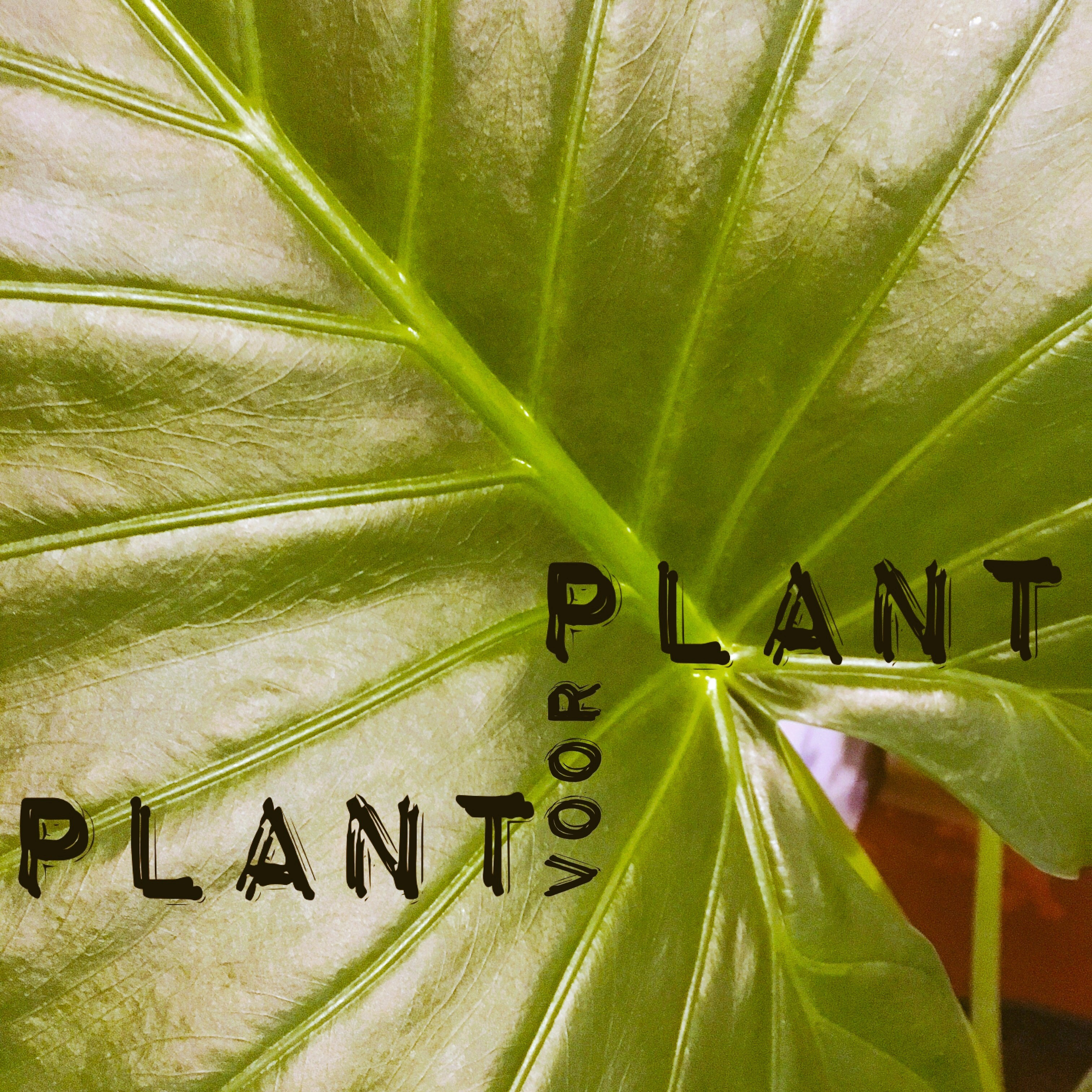 Plant voor Plant